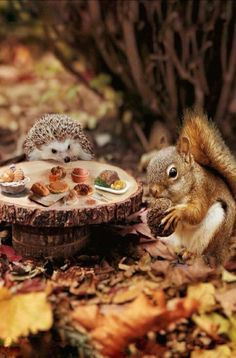 Awesome Stuff, Felting, Funny Animals, Fairy Tales, Outdoors, Autumn, Art Prints, Garden, Cute