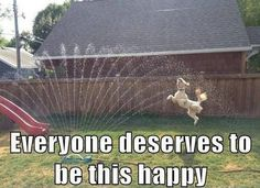 I wish I was this happy...