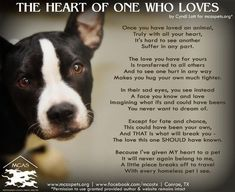 rescue dog quotes - Google Search