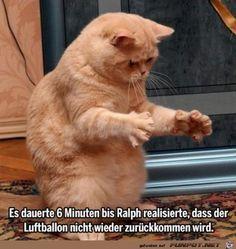 So herrlich diese Katze
