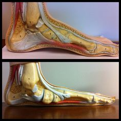 How the foot becomes stronger: My response to those who question minimalist running shoes.