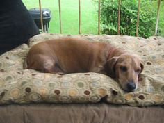 Brutus lounging on the antique baby bed I raised my children in that I turned into a loveseat on the front porch.