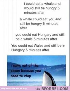 Hungry Whales…