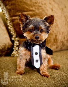 I wonder if abouna would let me have teddy walk the rings down the aisle?