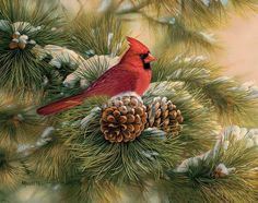 MATIN LUMINEUX: Rosemary Millette Boxed Christmas Cards, Christmas Bird, Illustration Noel, Image 3d, Cardinal Birds, Ouvrages D'art, Colorful Artwork, Bird Artwork, Christmas Paintings