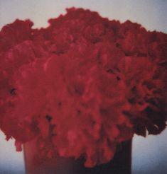 Cy Twombly, photography                                                                                                                                                                                 More