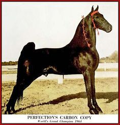 Carbon Copy, grandsire of Lillie's mare Copy, my favorite camp horse (and lived to be 32)
