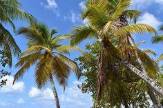 "#Madinina vue par @manon__machin: "" #naturalbeauty #naturelover #nature #terre #martinique #summer #sun #palmier #nikon #beautiful #beach #magic"" #WeLike ! A voir sur Instagram : http://ift.tt/1VTwhYt"
