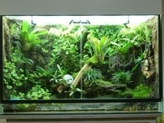 Great rain forest vivarium setup