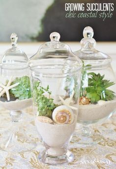 Growing Succulents in Apothercary Jars - Chic Coastal Style. Perfect for brown thumbs!