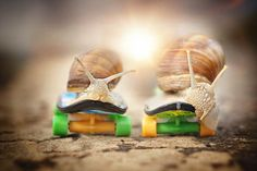 Here are the photographs of Gabi Stickler, an amateur photographer who captures the adventurous life of snails into cute and poetic compositions.