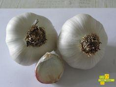 Estos son nuestro ajos, los puedes disfrutar durante todo el año, se siembran en noviembre y a primeros de julio los recolectamos http://www.lahuertadeanamary.com/hortalizas-y-conservas/hortalizas-2/otras-hortalizas-5/ajos-24.html