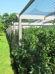 Badger Farm bird netting for fruit trees Blueberry Pinterest