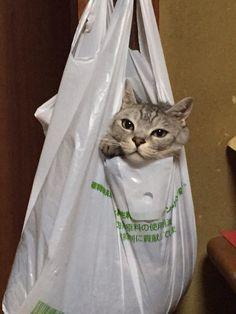 実家帰ったら猫があられもない姿で晒されてたんだけどけっこうリラックスした顔してんなお前