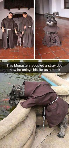 Funny Snapchats Dog Photo — 30 New Pics