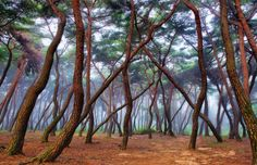 Mist forest by SEO  on 500px