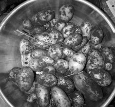 An the Seed Potato order is done for Picked up a bit of savings for ordering early, helped cover the shipping costs, which is nice indeed. I do like Eagle Creak Seed Potatos farm in Alberta,. Blueberry, Seeds, Eagle, Potatoes, Fruit, Vegetables, Nice, Cover, Recipes