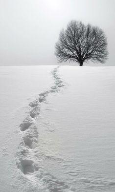 ❖Blanc❖ #White #Snow footprints #winter #photography idea photographycourses.biz