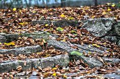 Autumn by Finta  Kolos on 500px