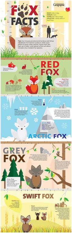 Infographic: Alissa Dicaire/Nick Walker