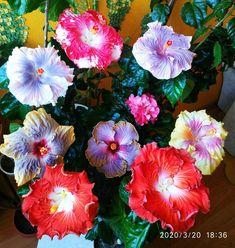 Di Ibisco Hawaiano Fiore Per Capelli Clip Hawaii Luau Tropicale Ghirlanda Festa Hula Spiaggia