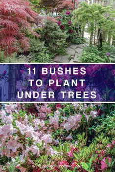 Find out which bushes to plant under trees in the shade garden in your backyard or front yard. These shrubs will help to brighten up your yard. #fromhousetohome #bushes #shade #gardeningtips #gardening #gardenideas Backyard Garden Landscape, Backyard Plants, Garden Shrubs, Flowering Shrubs, Garden Trees, Shade Garden, Backyard Landscaping, Garden Bed, Garden Plants