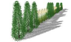 Sichtschutzkombinationen Teil 2 - Säulembäume und Gräserhecke