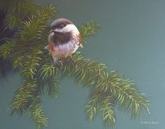 """Chickadee on a Fir Branch"", © 2011 by Ursillo by John Ursillo Colored Pencil ~ 11 x 14"