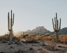 a place with cactus and sun