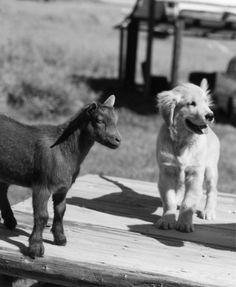 Bruce Weber's Dogs! A Canine Portfolio   Vanity Fair