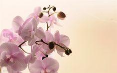 foto de fleurs: лучшие изображения (351)   Цветы, Розовые орхидеи и ...