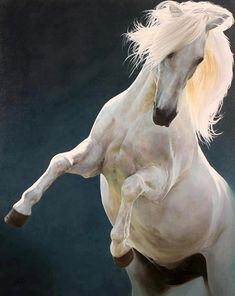 Lord of The Rings Shadowfax star horse 'Blanco'  Photographer unknown