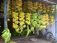 Kerala_bananas