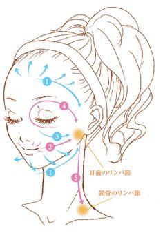 疲れ顔やむくみ顔に悩んでいる方は、血液やリンパ液の流れを促進してあげることが大切です。巡りがスムーズになれば、顔色も明るくスッキリとした印象に。しわやシミの予防にも繋がります!リンパマッサージ&顔ツボ指圧方法を覚えてモテ小顔を手に入れましょう♡