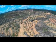 Drone Captures Shocking Footage of Rainforest Destruction Caused by Palm Oil (VIDEO) | One Green Planet