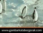 Gambar animasi binatang lucu bergerak, pinguin paling jail :D