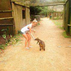 Trip to Phillip Island #phillipisland #melbourne #wildlife  #park #island #trip #goodday #travel #travelblog #travelphotos #adventure #fun #amazing #day #animals #goodtime #instatravel #instagood #follow #dream #wanderlust #australia #lifeyourlive #enjoy by laaa93