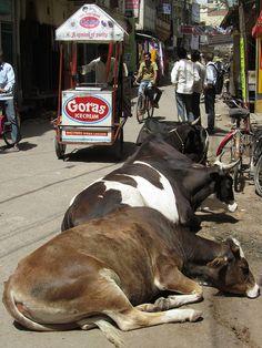 INDIA - Varanasi Street Scene