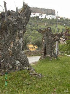 Junto a los árboles