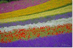 北海道タンデムツーリング ラベンダーのファーム富田 : うひひなまいにち