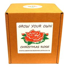Grow Your Own Christmas Rose Plant Kit - Planting kit for children and adults Christmas Rose, Planting Roses, Garden Gifts, Grow Your Own, White Flowers, Fathers Day, Kit, Children, Birthday