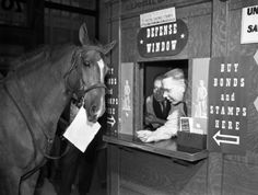 In what was probably a staged photograph opportunity designed to build support for a bond drive, a horse approaches two post office workers at a service window as if to purchase defense bonds. Minnesota Historical Society, Army Infantry, Joe Cocker, Historical Images, Cool Pictures, Retro Pictures, World War Ii, Wwii, Bond
