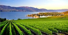 Great picture of the vineyard at Quails Gate Winery! Love the view at this winery! Hotel Packages, Vacation Packages, Flight And Hotel, Holiday Photos, Canada Travel, Great Pictures, Wine Country, Dream Vacations, British Columbia