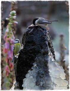 Suvikumpu Victorian, Birds, Fashion, Moda, Fashion Styles, Bird, Fashion Illustrations