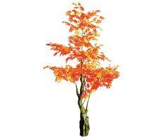 artificial maple orange indoors spacegreen Greenery, Trees, Indoor, Orange, Interior, Tree Structure, Wood