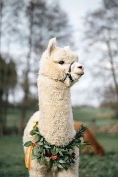 Alpacas, Cute Creatures, Beautiful Creatures, Animals Beautiful, Animals And Pets, Funny Animals, Cute Alpaca, Jolie Photo, Cute Little Animals