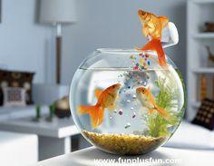 Real Funny Animal | really funny animals Really Funny Fish Wallpaper