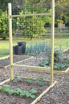 Growing cukes in cages......anyone do it this way? - Vegetable Gardening Forum - GardenWeb