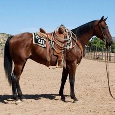 Good Ranch Gelding for Sale - For more information click on the image or see ad # 35580 on www.RanchWorldAds.com