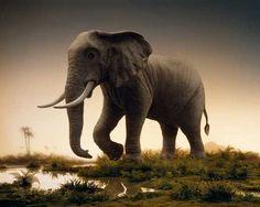 Didier Massard, The Elephant (2008), via Artsy.net